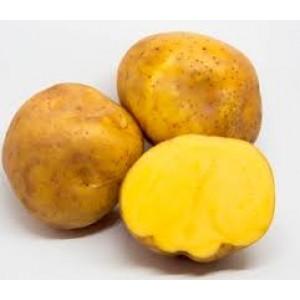 Papa amarilla