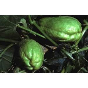 Chayote Criollo (Verde Oscuro)