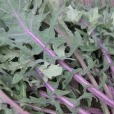 Kale Morado Orgánico