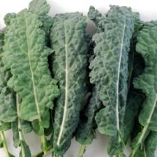 Kale Toscano Orgánico