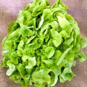Lechuga Hoja Roble Verde  Orgánica